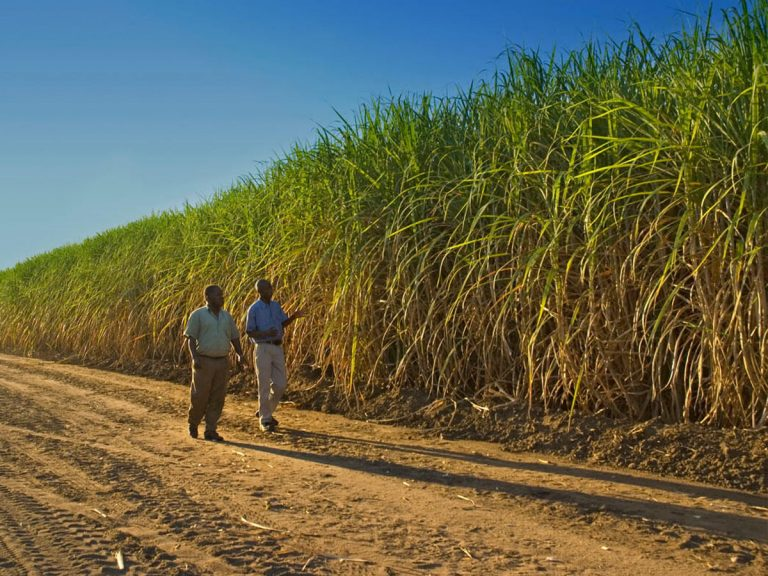 South African stakeholders sign plan to save $908 Million Sugar Industry