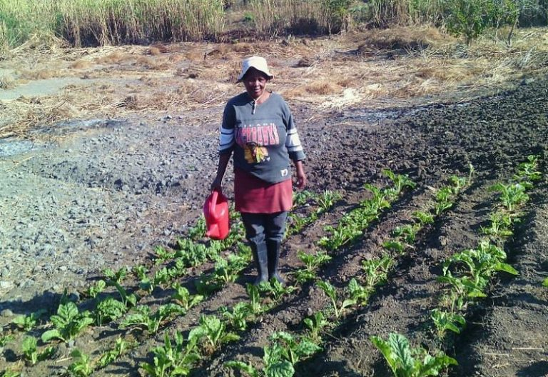 South Africa announces $66 million relief program for subsistence farmers