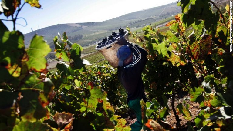 South Africa's wine industry battles for partial lifting of alcohol sales ban