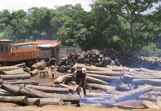 Guinea Bissau's dilemma: Preserve forests and lose main source of income
